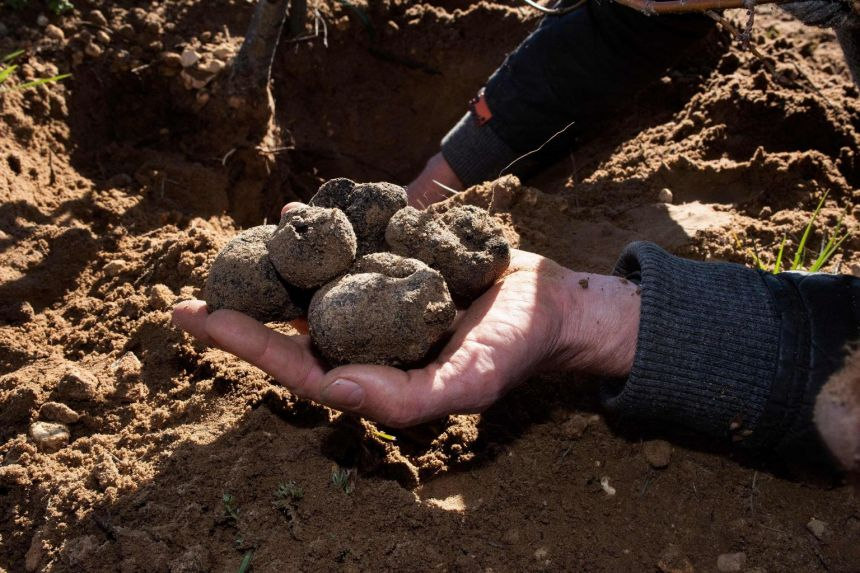 South Africa's 'crazy' mountain farmers cash in on truffle bet