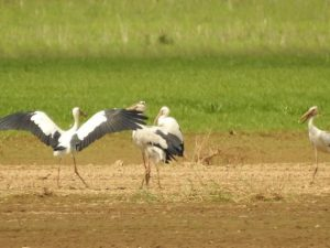 Rare birds flock to Dong Nai Culture and Nature Reserve