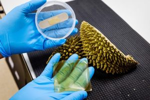 ​NTU scientists develop antibacterial gel bandage made from durian husk