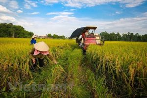 Steering committee talks review of implementation of Party resolution on agriculture
